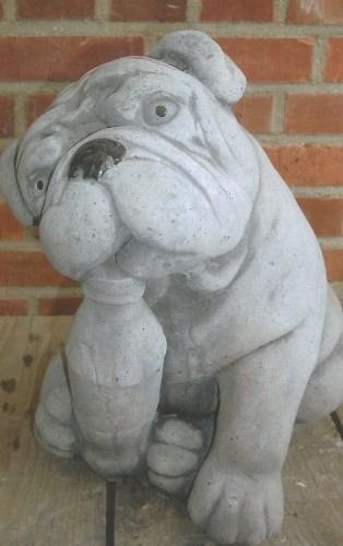 Bulldog pup met fles