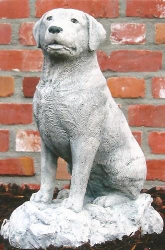 Labrador zittend